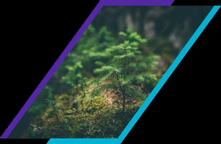 Sustainability_Desktop_1x